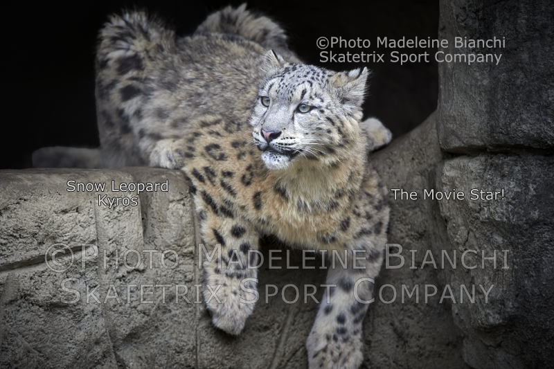 Snow Leopard KYROS - How funny! Stupid leftists as most useful idiots of capitalism!