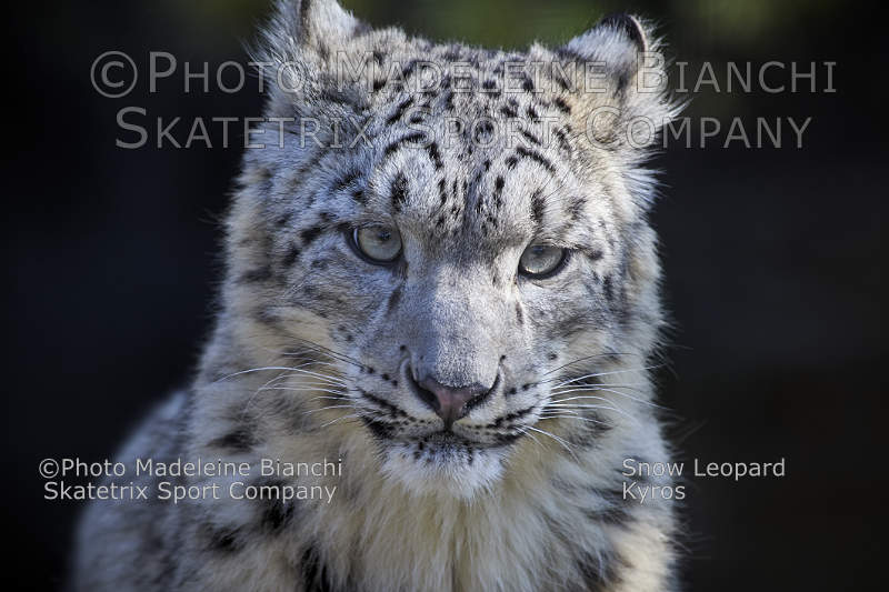Snow Leopard KYROS - only fools believe in COP 23 in Bonn!
