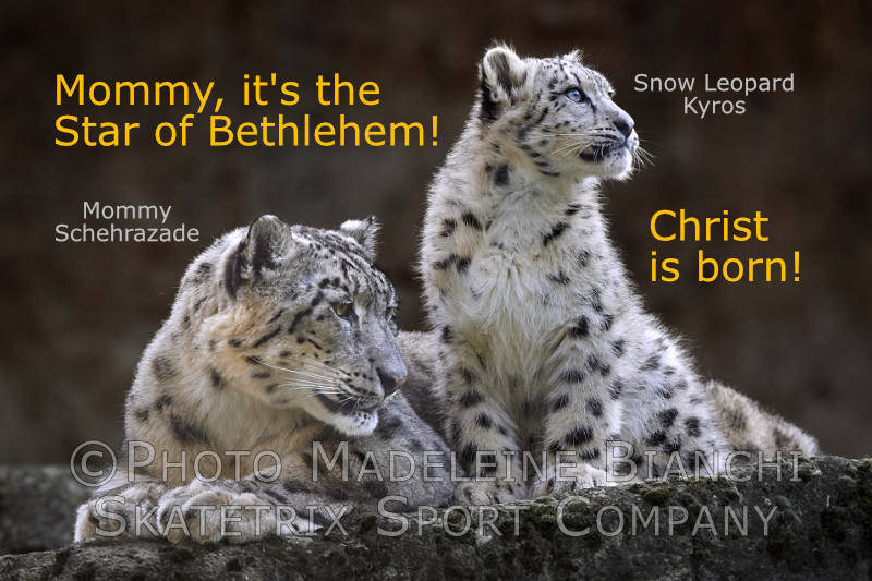 Snow Leopard KYROS - my pure, little heart sees the Birth of Christ!