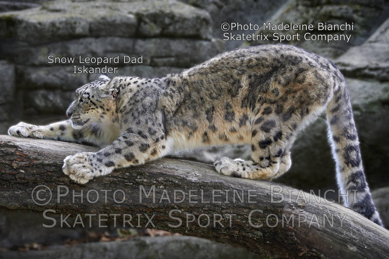 Snow Leopard ISKANDER - Isn't Swiss Government completely gaga?
