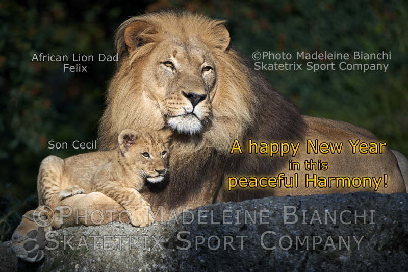 African Lion Daddy FELIX with Little Son CECIL - you'll never get peace for free!