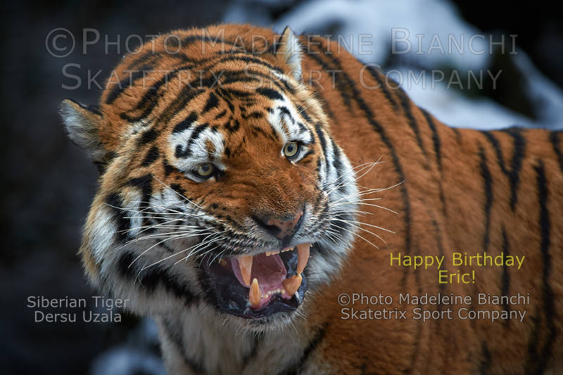 Siberian Tiger DERSU UZALA - Eric and me, we are of the same blood!
