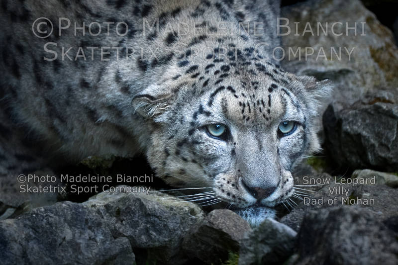 Snow Leopard VILLY - The future of civilized people - the brain death!