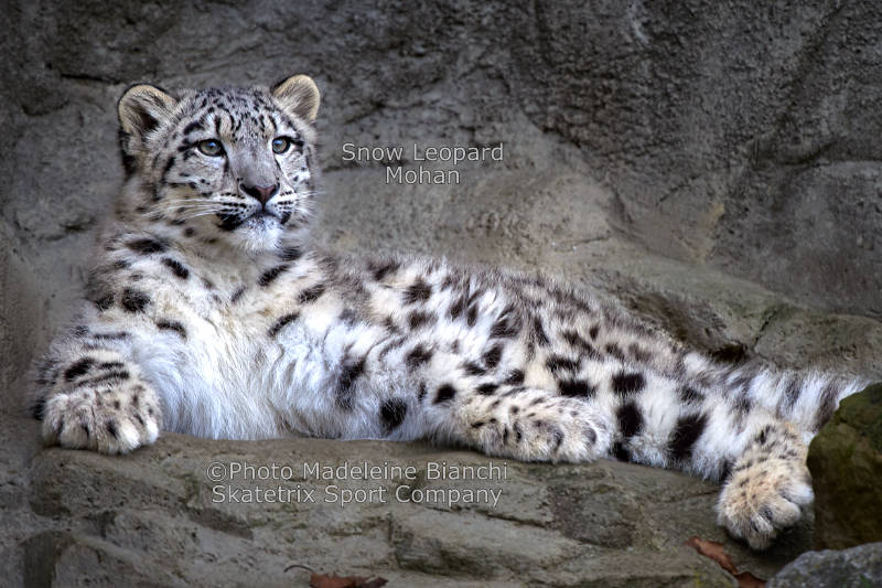 Little Snow Leopard MOHAN - A quantum of solace for the minority of brainy people!
