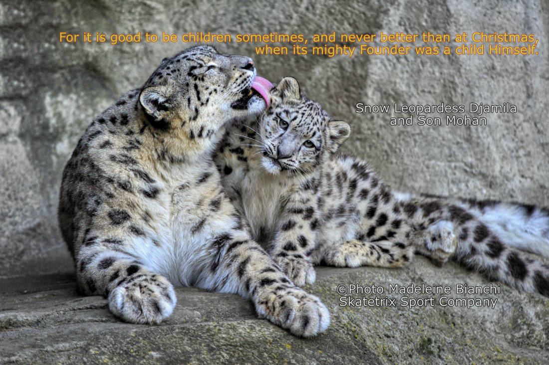Little Snow Leopard MOHAN and Mommy DJAMILA - we wish you a merry Christmas!