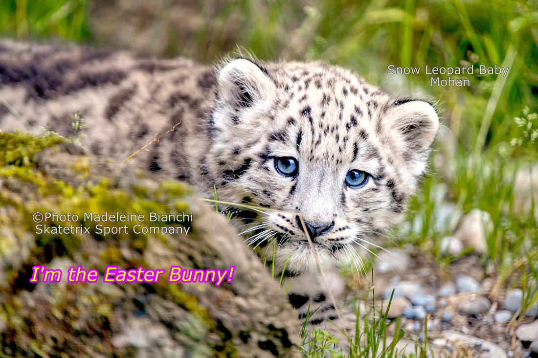 Little Snow Leopard MOHAN - Howdy, folks! I am the cute little Easter bunny MOHAN! And I think I have an important message for every one of you! TAKE A BREAK! Because I want to remind you of a guy named JESUS!